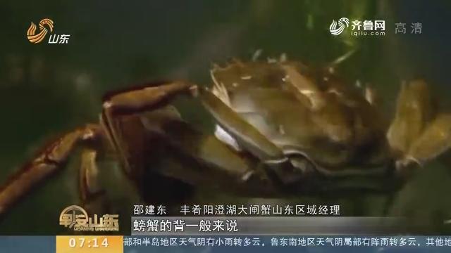 【闪电新闻排行榜】如何购买正宗阳澄湖大闸蟹?
