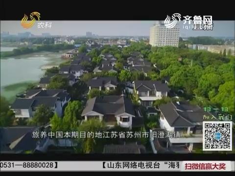旅养中国:阳澄湖大闸蟹