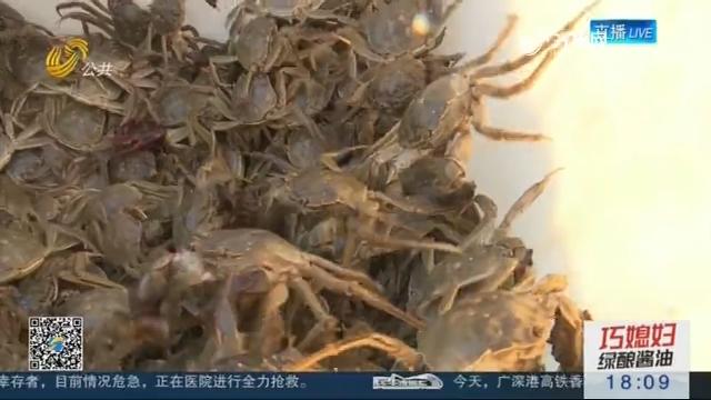 【中国农民丰收节】东营:黄河口大闸蟹喜获丰收
