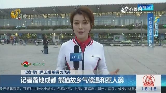【淄博原山将再迎大熊猫】闪电连线:记者落地成都 熊猫故乡气候温和惹人醉