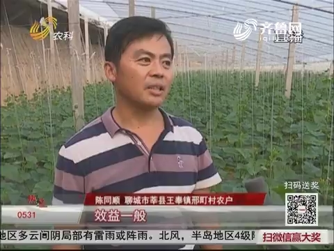 【乡村振兴】莘县王奉镇:蔬菜大棚引领脱贫致富