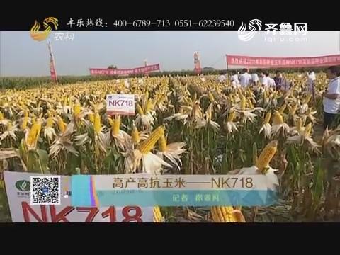 高产高抗玉米——NK718