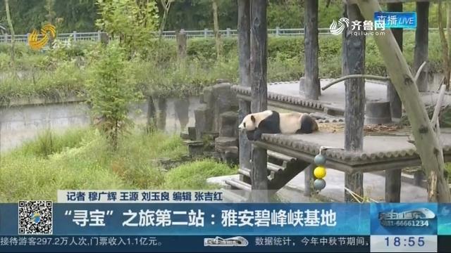 """【淄博原山将再迎大熊猫】""""寻宝""""之旅第二站:雅安碧峰峡基地"""
