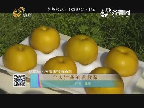 【小螺号·农技服务直通车】个大汁多的贵族梨