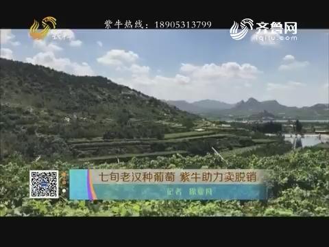 七旬老汉种葡萄 紫牛助力卖脱销