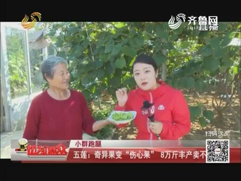 """【小群跑腿】五莲:奇异果变""""伤心果"""" 8万斤丰产卖不动"""