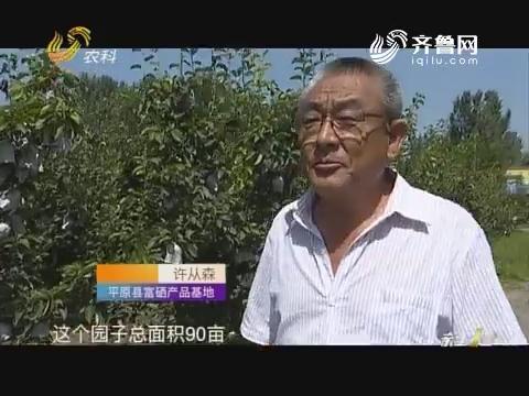 """【寻找最美果园】""""桃梨""""园 好卖钱"""