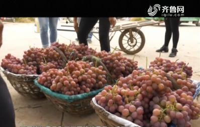 亲土种植——不愁卖的葡萄