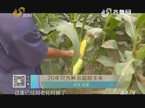 20年只为种出超甜玉米