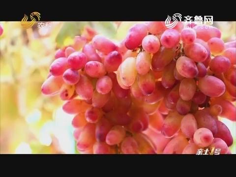 跃居世界第一的中国葡萄