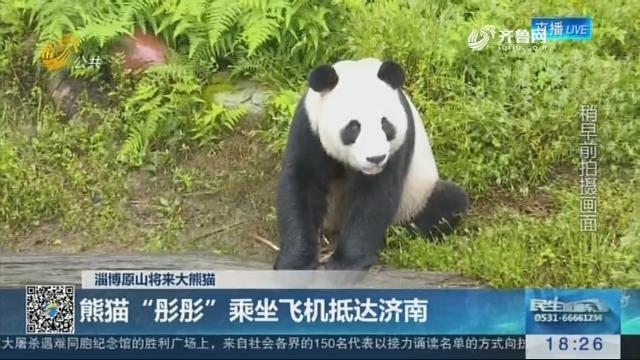 """【淄博原山将来大熊猫】熊猫""""彤彤""""乘坐飞机抵达济南"""