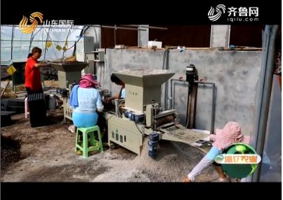 20180929《淄江农业》:卓郅农业 用科学新技术 开启种苗培育新时代