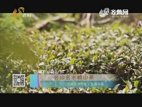 品牌农业在山东:名山名水崂山茶