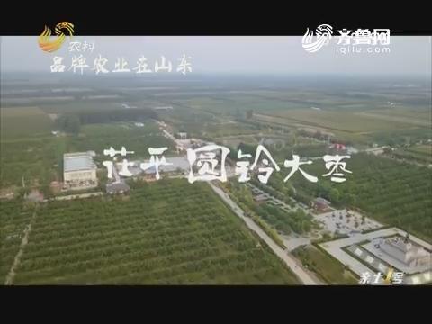 品牌农业在山东:茌平圆铃大枣