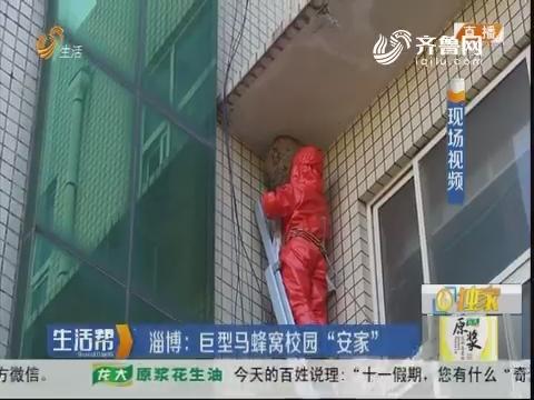 """淄博:巨型马蜂窝校园""""安家"""""""