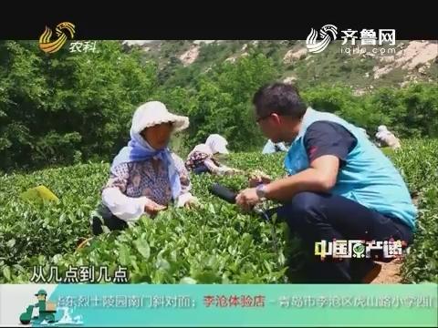 20181003《中国原产递》:日照绿茶