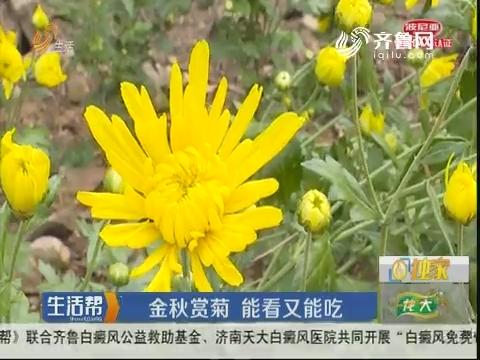 青岛:金秋赏菊 能看又能吃