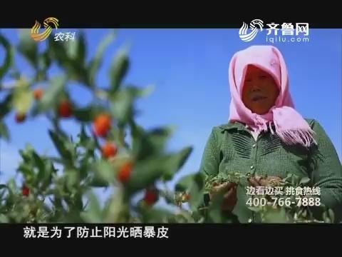 20181004《中国原产递》:宁夏枸杞