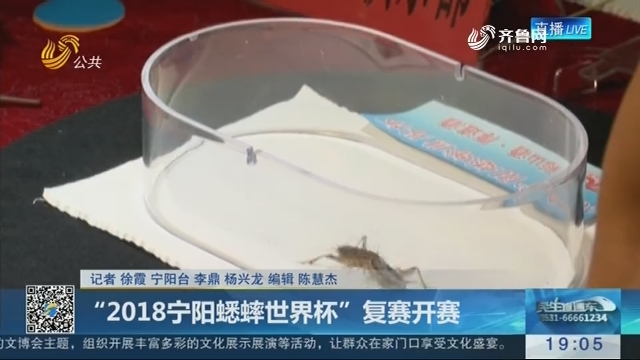 """""""2018宁阳蟋蟀世界杯""""复赛开赛"""