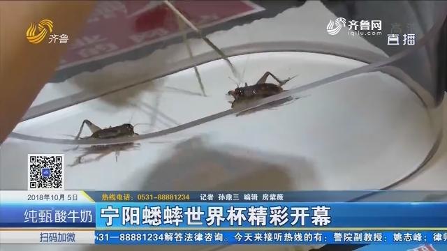 宁阳蟋蟀世界杯精彩开幕