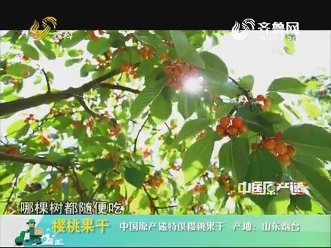 20181005《中国原产递》:樱桃果干