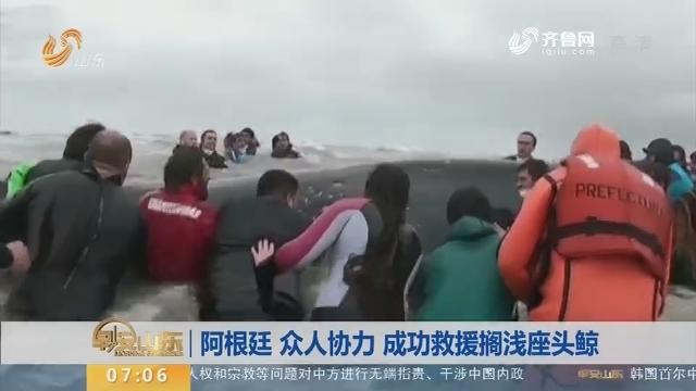 【昨夜今晨】阿根廷 众人协力 成功救援搁浅座头鲸