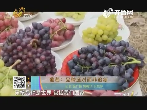 葡萄:品种选对而非追新
