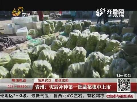 【情系灾区 重建家园】青州:灾后补种第一批蔬菜集中上市