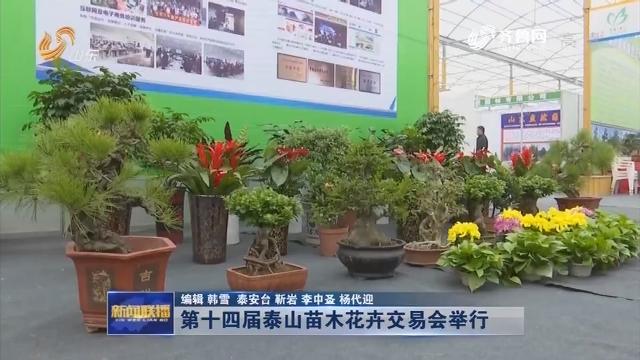 第十四届泰山苗木花卉交易会举行