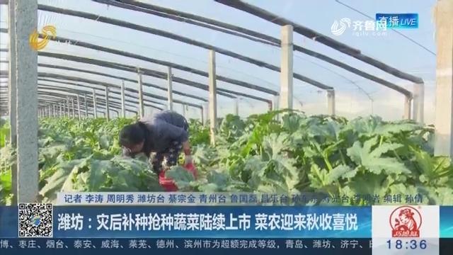 潍坊:灾后补种抢种蔬菜陆续上市 菜农迎来秋收喜悦