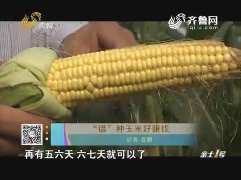 """""""错""""种玉米好赚钱"""