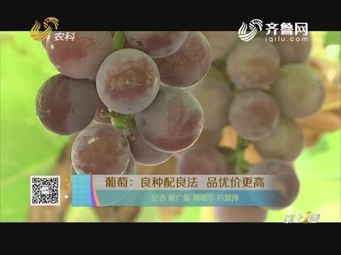 葡萄:良种配良法 品优价更高