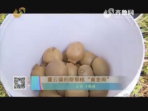 """董云健的猕猴桃""""黄金周"""""""