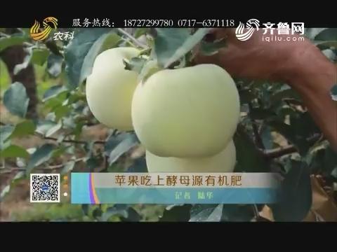 苹果吃上酵母源无机肥