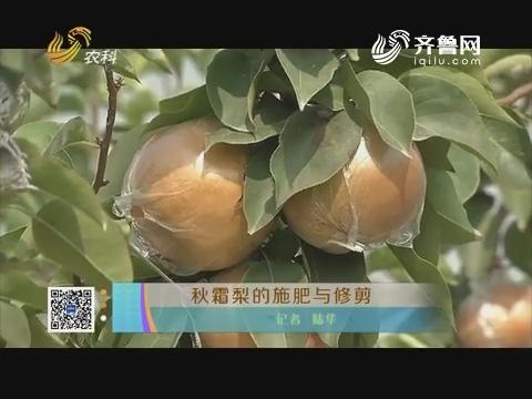 秋霜梨的施肥与修剪