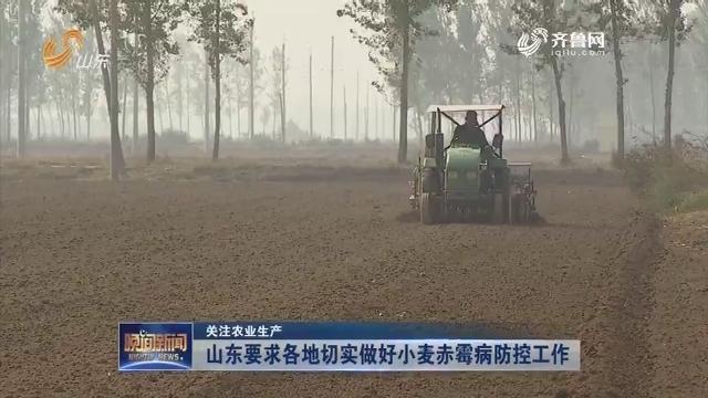 【关注农业生产】山东要求各地切实做好小麦赤霉病防控工作