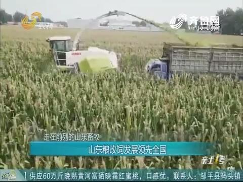 20181014《农科直播间》:走在前列的山东畜牧--山东粮改饲发展领先全国