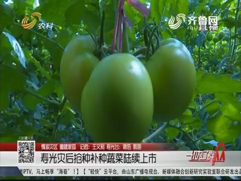 【情系灾区 重建家园】寿光灾后抢种补种蔬菜陆续上市