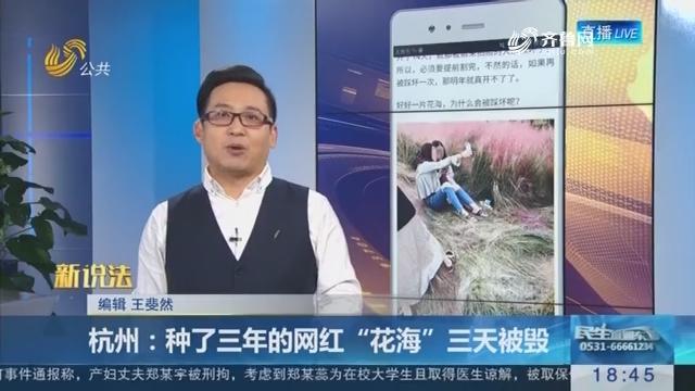 """【新说法】杭州:种了三年的网红""""花海""""三天被毁"""