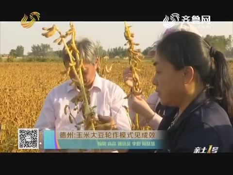 德州:玉米大豆轮作模式见成效