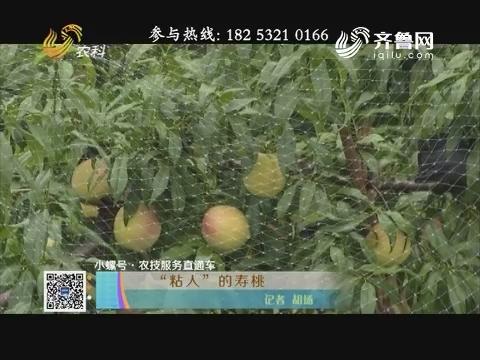 """【小螺号·农技服务直通车】""""粘人""""的寿桃"""