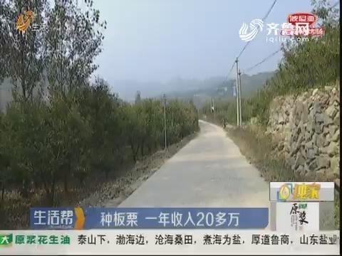 潍坊:种板栗 一年收入20多万