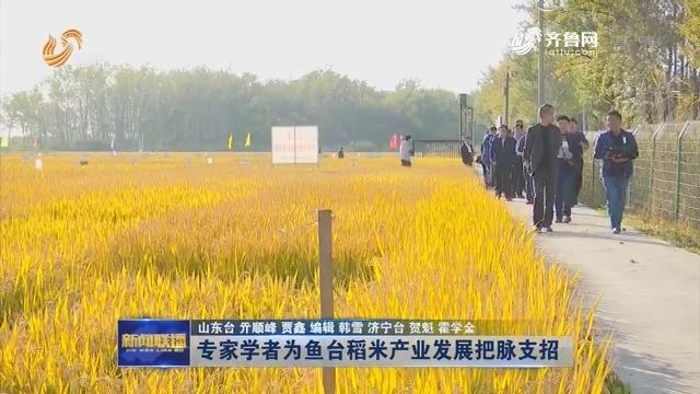 专家学者为鱼台稻米产业发展把脉支招