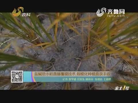 盐碱地水稻直播覆膜技能 范围化莳植喜获歉收