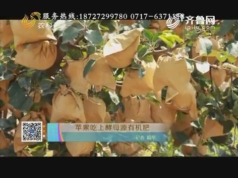 苹果吃上酵母源有机肥
