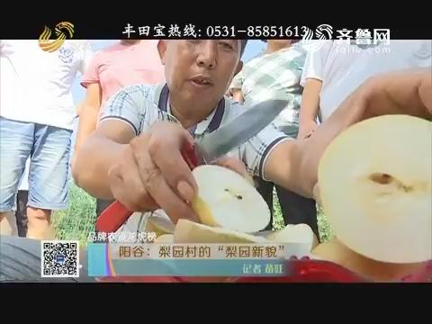 """【品牌农资龙虎榜】阳谷:梨园村的""""梨园新貌"""""""