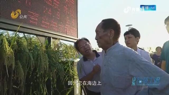 山东超级工程:袁隆平和他的海水稻梦