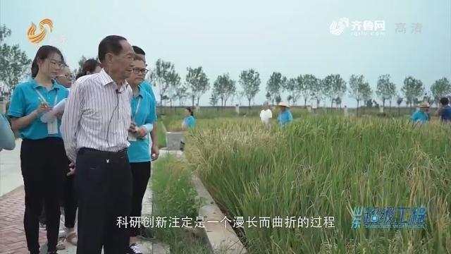 【闪电旧事排行榜】山东超等工程:袁隆温和他的海水稻梦