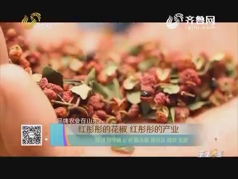 【品牌农业在山东】红彤彤的花椒 红彤彤的产业