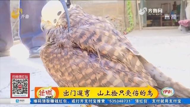 淄博:出门遛弯 山上捡只受伤的鸟